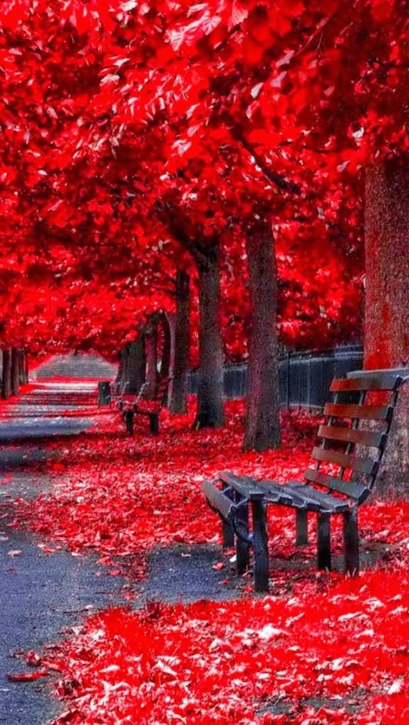 RED FLOWER ROAD WALLPAPER