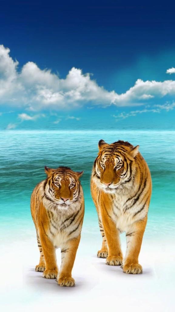 tiger on beach