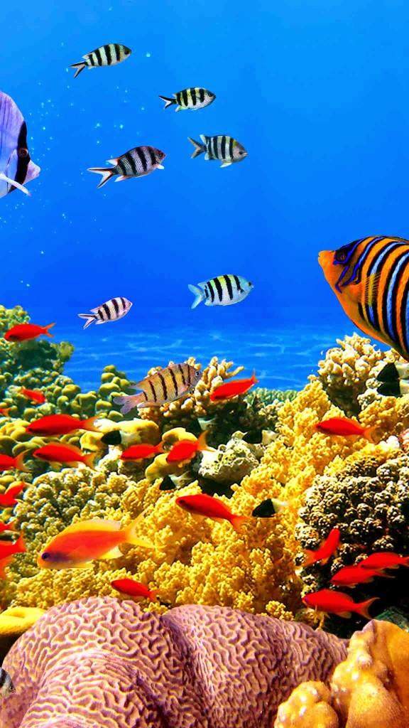seafish wallpaper