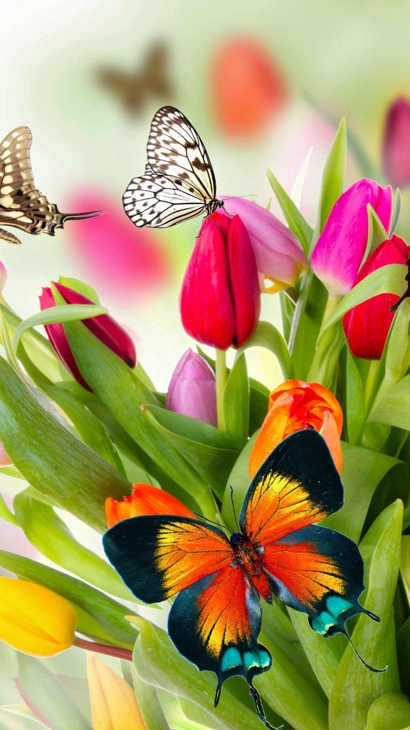 butterfly flower image