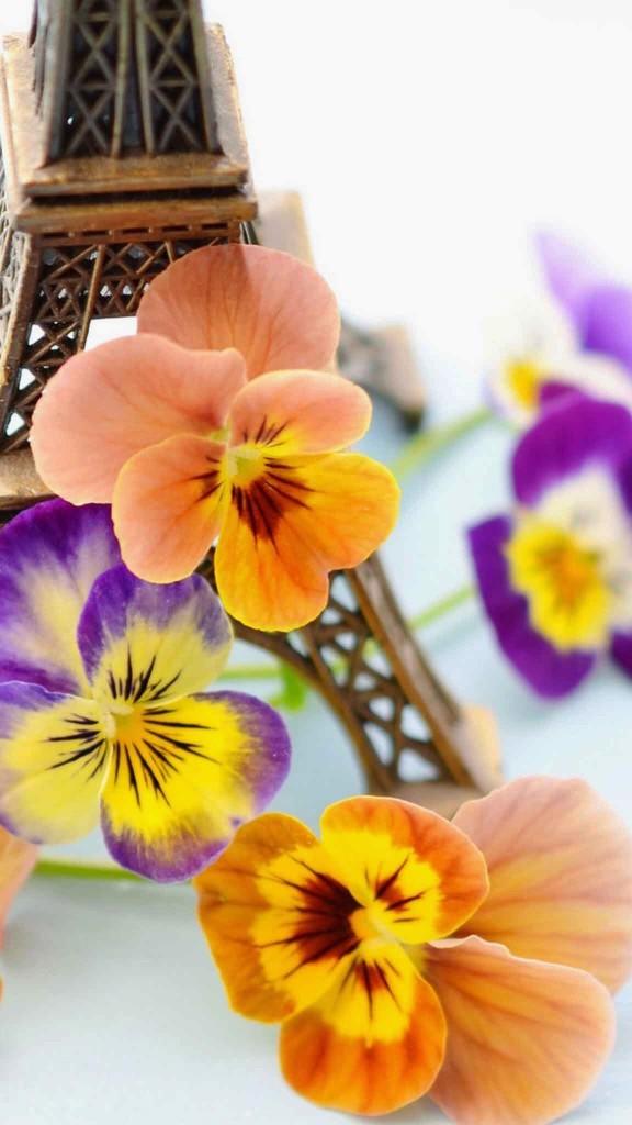 COLORFULL FLOWER WALLPAPER