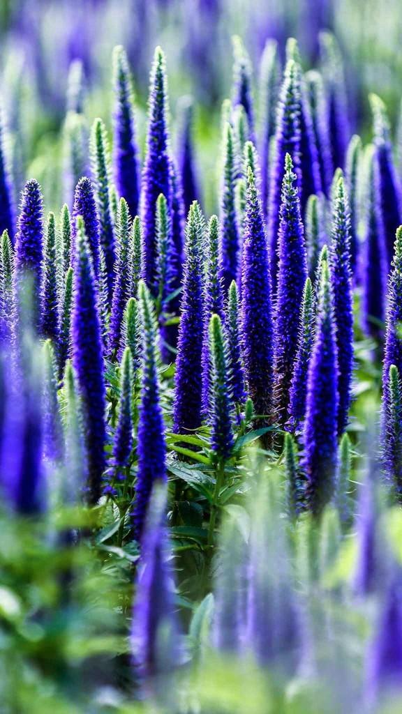 FLOWER IN BLUE WALLPAPER
