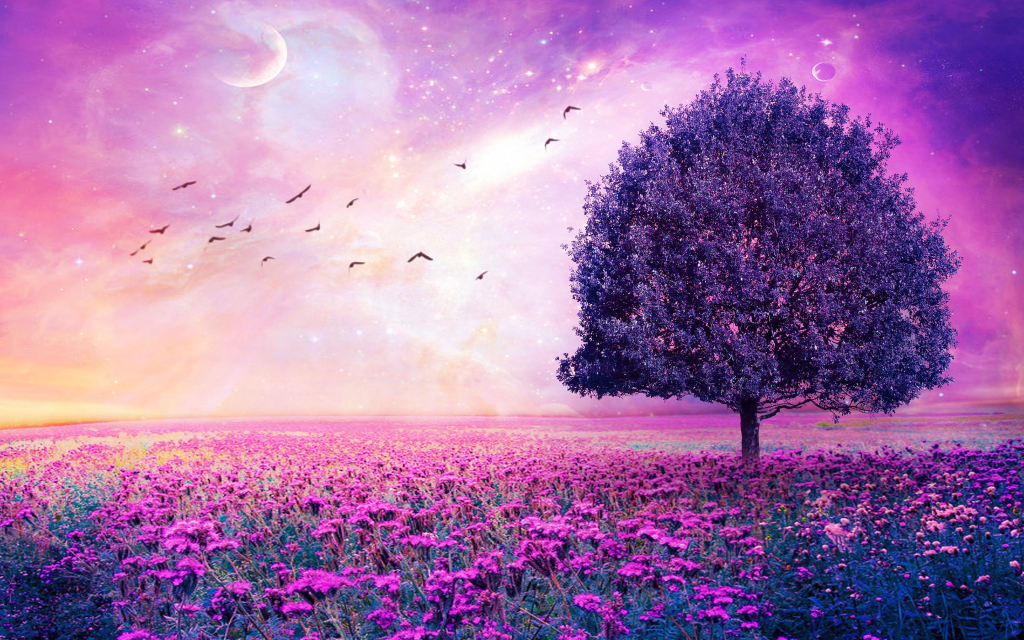 Red sky bird and flower wallpaper in pink for WINDOWS AND MAC BACKGROUDNS