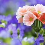 Some Beautiful HD Wallpapers of flowers