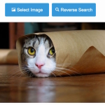 Google Reverse Image Search Usage, Search by image