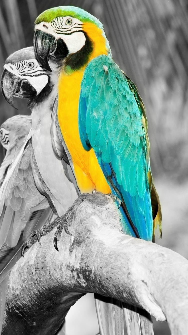 iPhone 7 colorful parror wallpaper