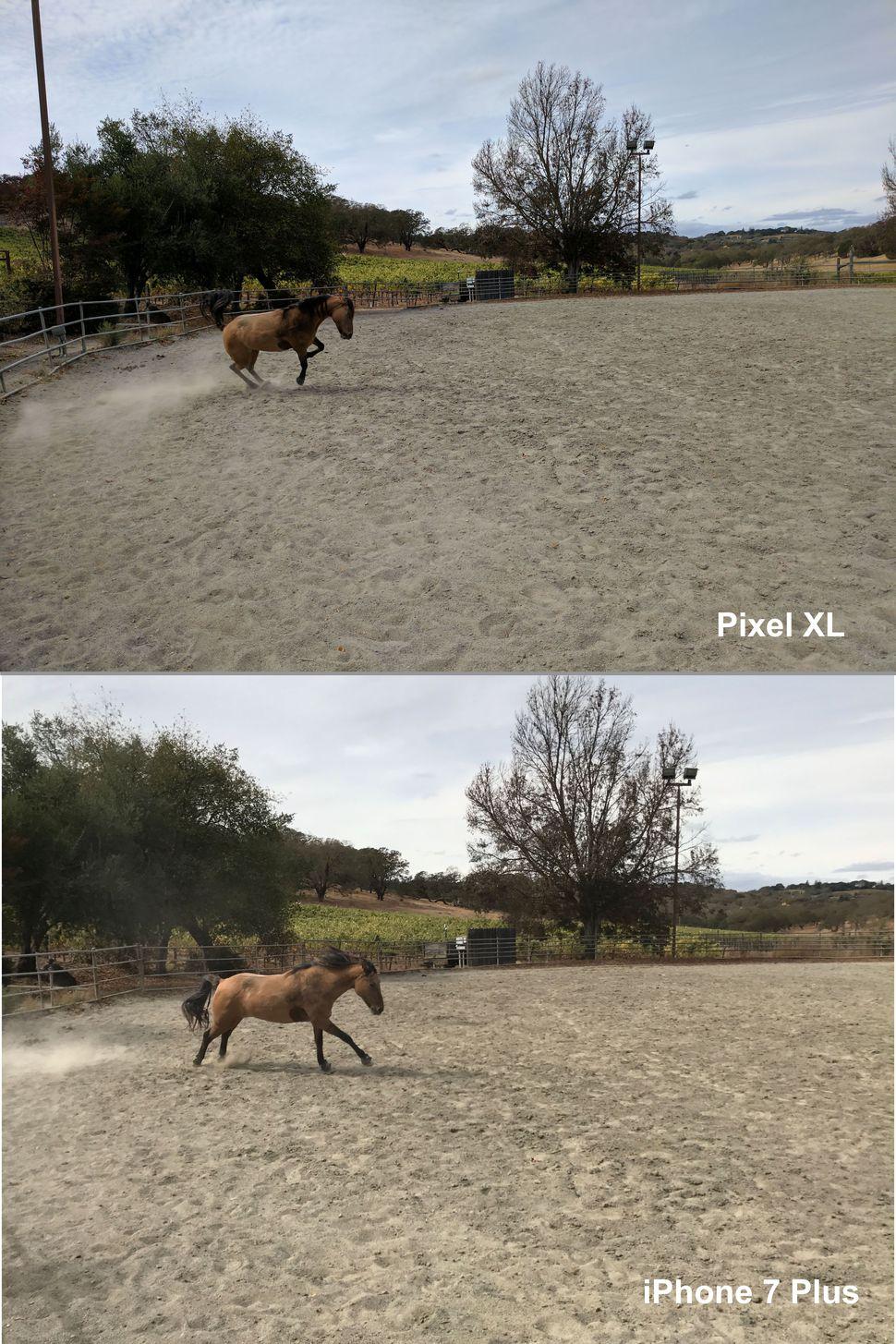 iphone-7-plus-vs-google-pixels-xl