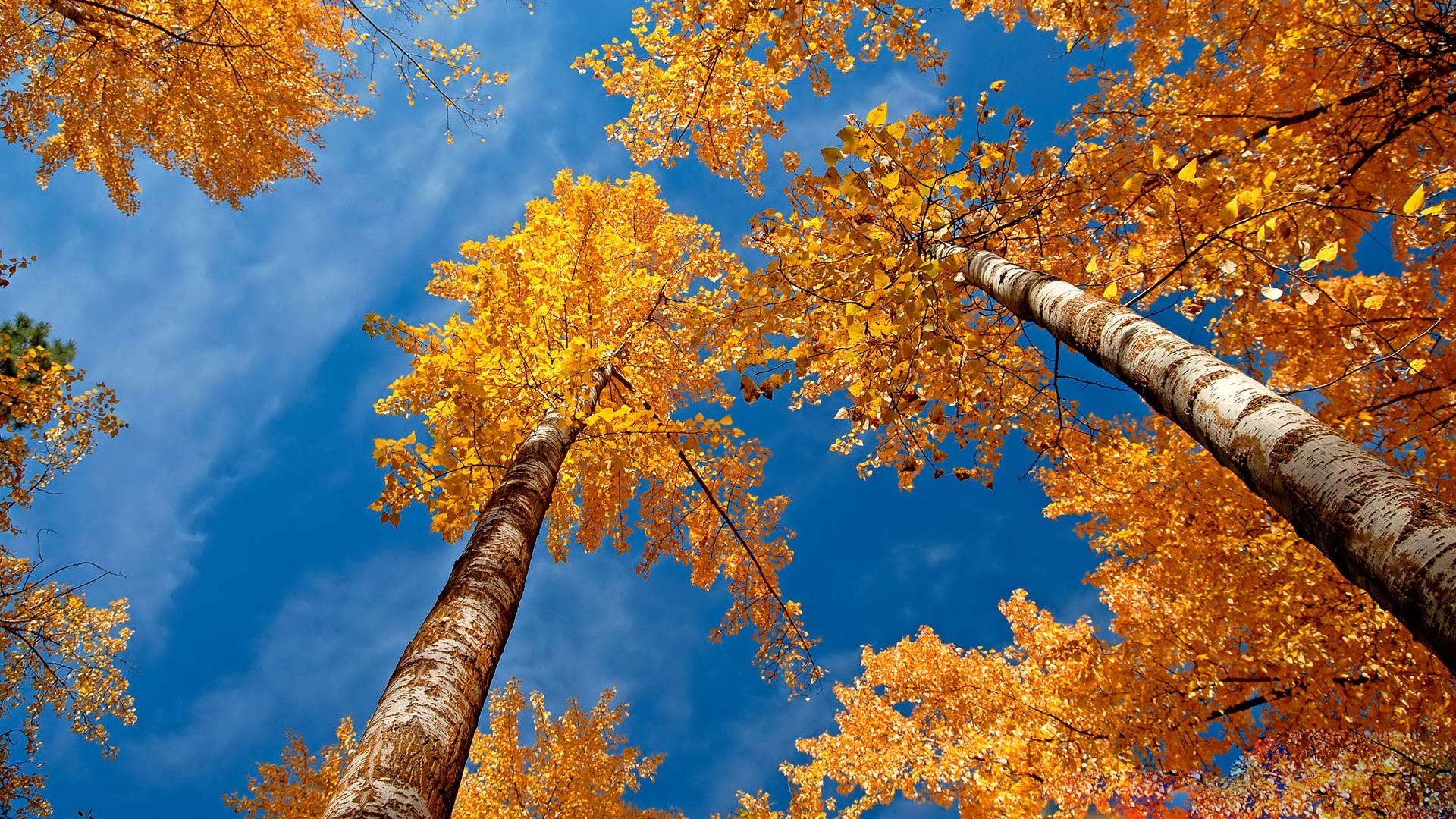 autumn-wallpapers-7