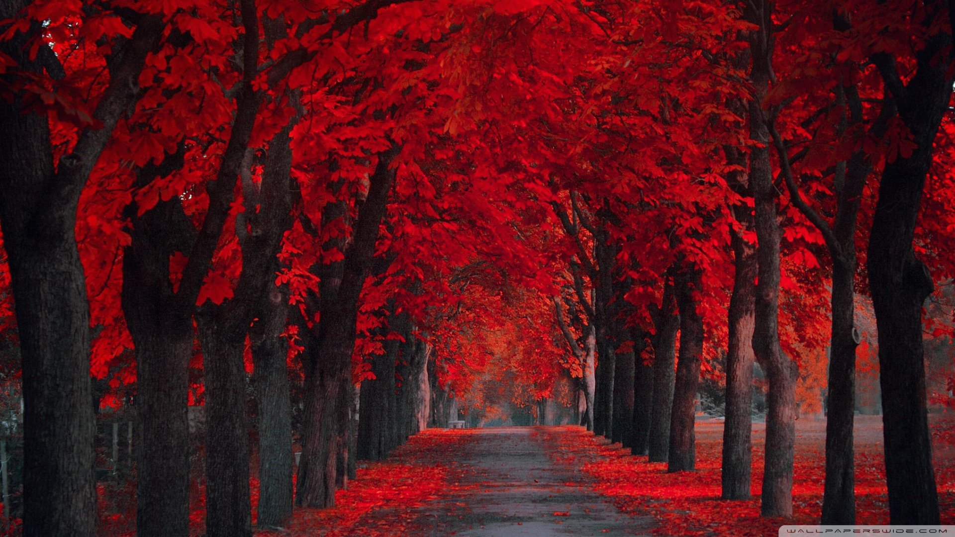 ... Fall Wallpapers Full Red ...