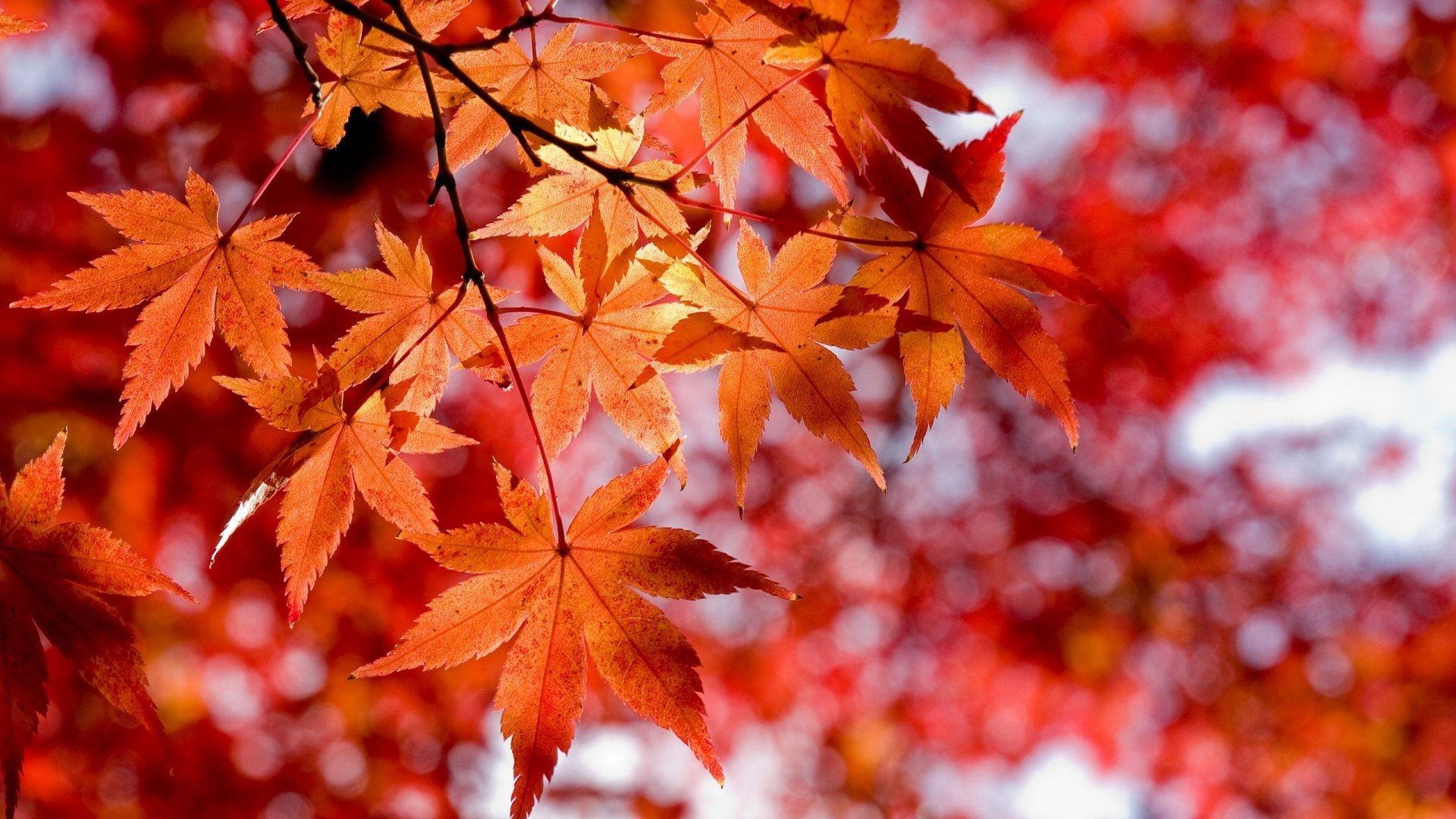 fall-wallpapers-leaves