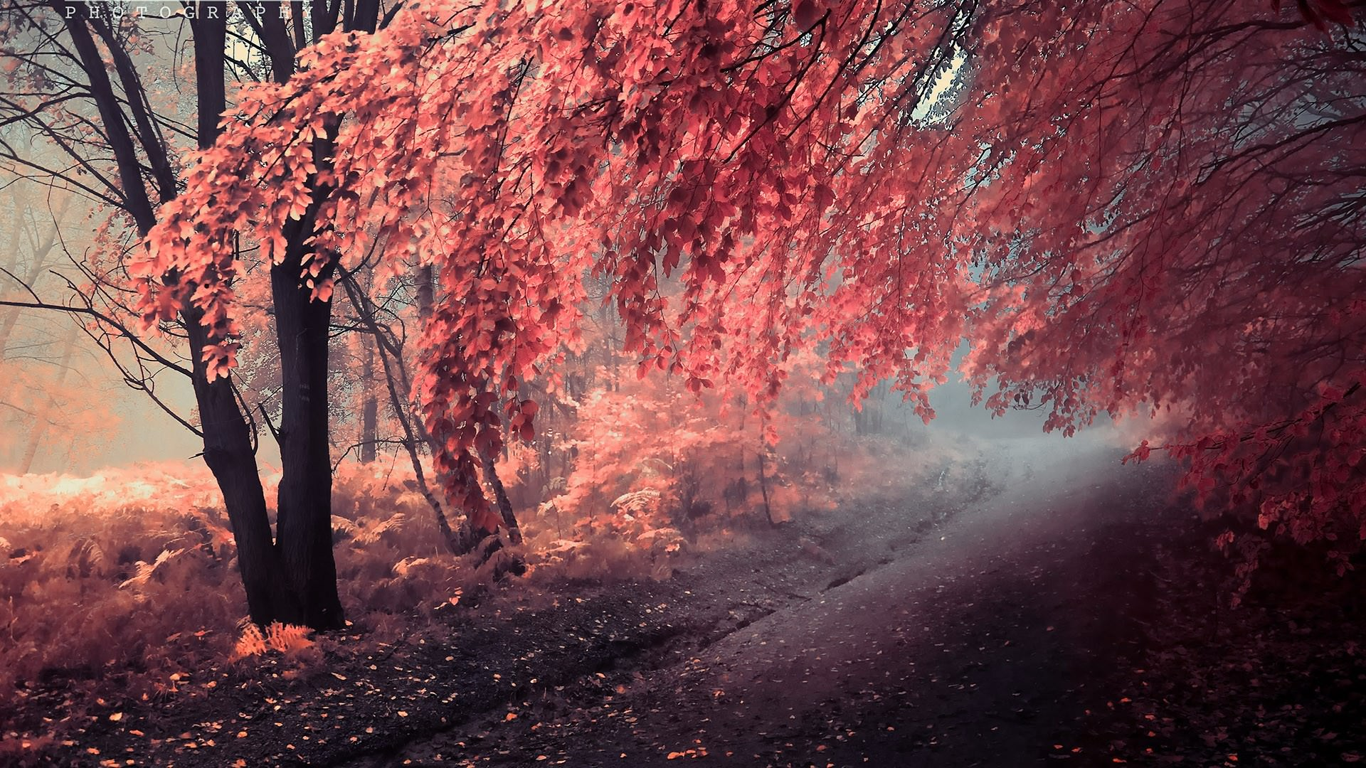 fall-wallpapers-pinkish