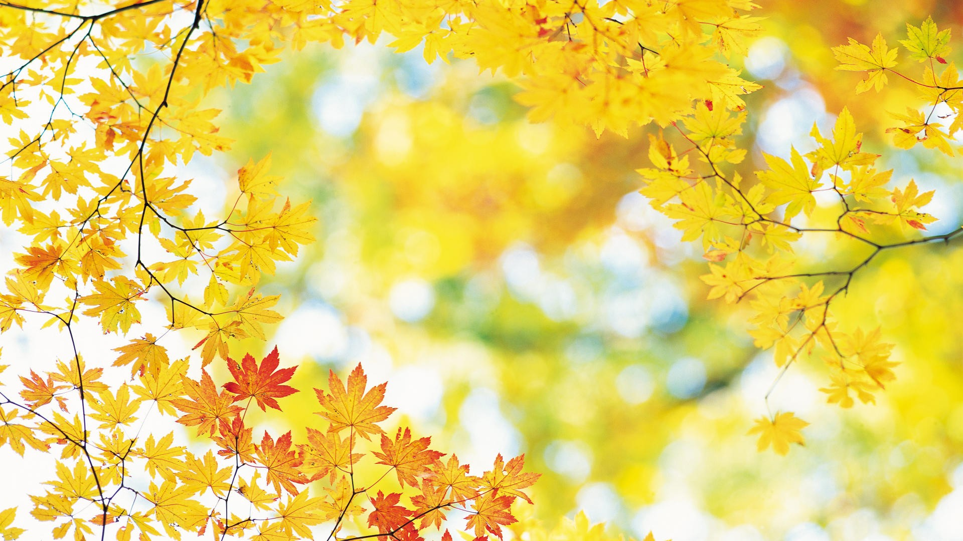 ... Fall Wallpapers Yellow Leaves ...
