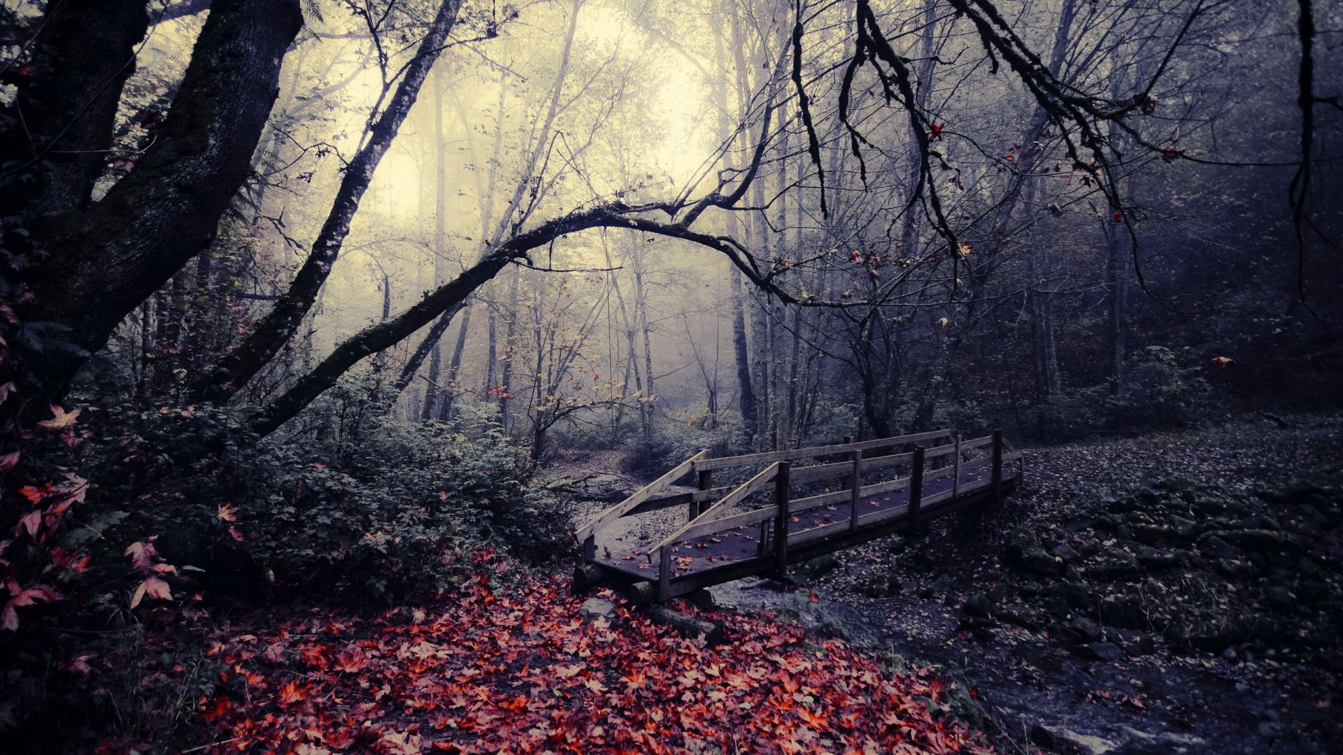 autumn-background-jungle-bridge
