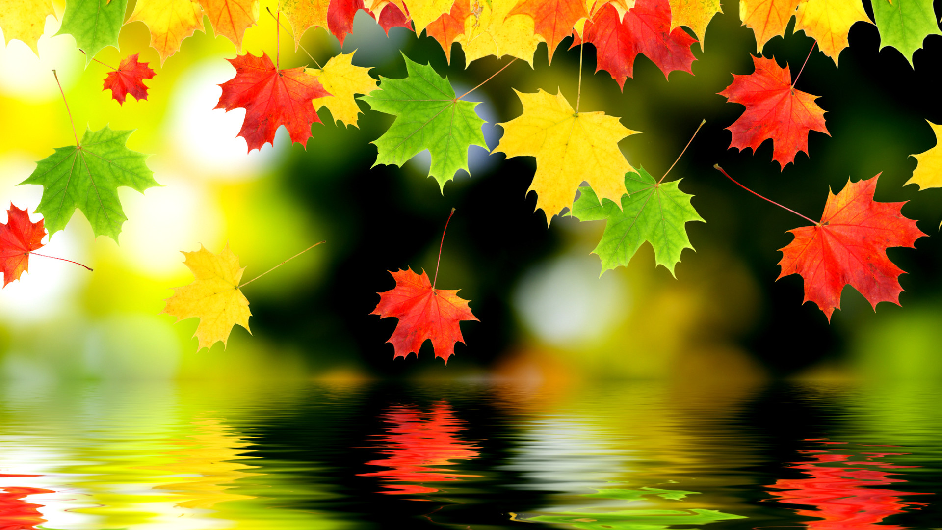 Full HD Autumn Or Fall Wallpapers With Maple Leaves
